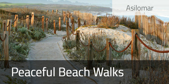 Beach Walks and Asilomar Activities
