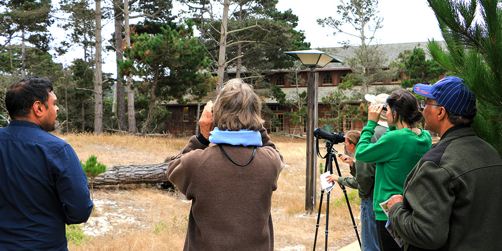 Asilomar Bird Watching Group Tour
